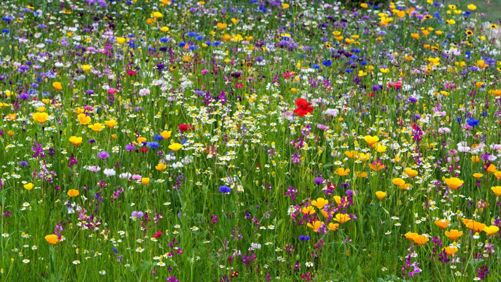 Ranunculus_Poppies_443013